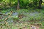 Borough Woods, Nr Lee, North Devon