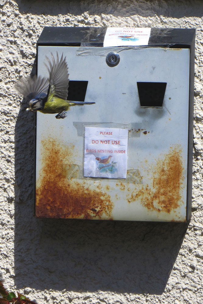 Bluetit nesting in cigarette bin