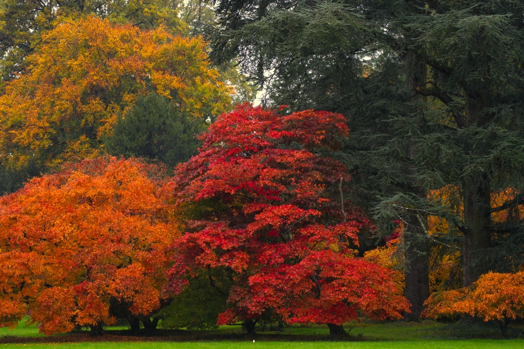 Westonbirt Autumn